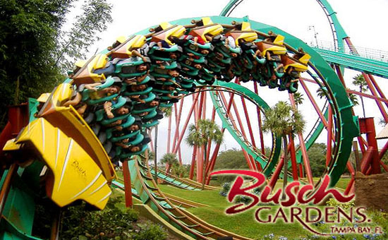 Packages To Orlando From Miami Lodging Transfers Tickets. Busch Gardens ...
